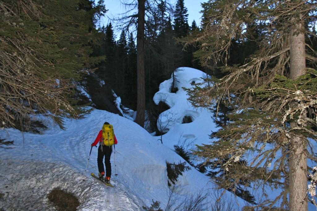 Waldaufstieg