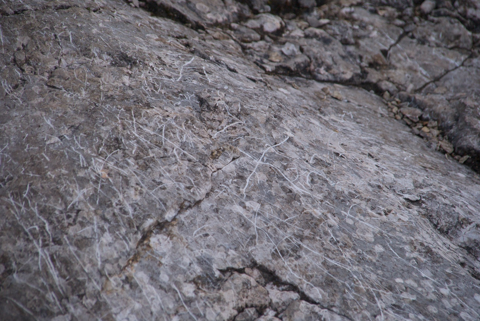 Ötscher 11.06.2011 - 019